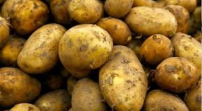 Ziemniaki tuczą – fakt czy mit?