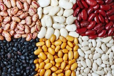 fasola bogata w białko