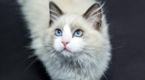 Uczulenie na sierść kota – dowiedz się jak zwalczyć problem