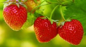 Zdrowie z truskawek