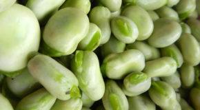 Właściwości bobu – czy warto go jeść?