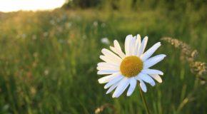Wiosna-dobry czas na zmianę