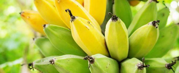Banan –pyszny owoc i nie tylko